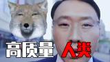 人类高质量藏狐