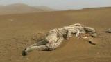 罗布泊发现干尸,《山海经》的记载可能并非是神话,而是真的