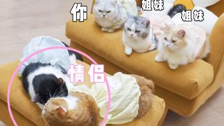 小猫咪因体检剃光肚皮,为了遮羞穿上小裙子!结果……