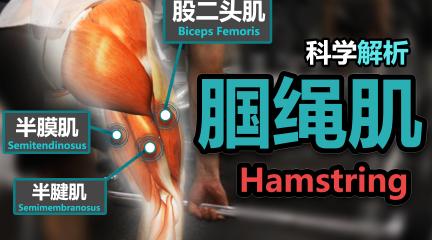 腿部究极训练解析-腘绳肌!【7篇科学研究】【究极训练解析】【科学解析】