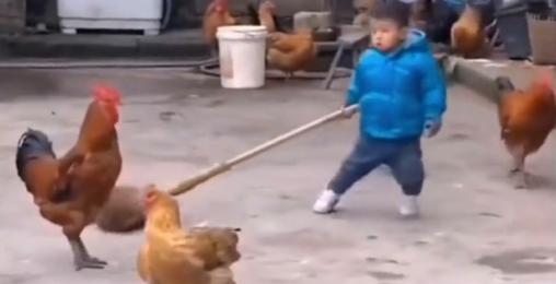 《动物武道会》