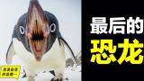 企鹅:最后的恐龙,飞翔、直立之谜,神奇大鸟击碎三观、征服南极