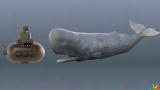 """人类所能探索到的""""马里亚纳海沟""""最深处, 发现了什么? 来看吧!"""