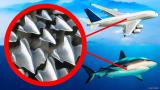 你不知道的8件鲨鱼对于人类的贡献