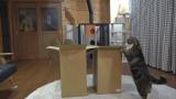 一个纸箱子本喵可以玩一年!