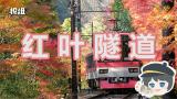 【报信儿】坐着火车赏枫叶是一种什么体验?