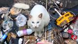 垃圾堆断尾白猫: 别放弃我的孩子,也救救它吧!