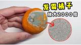 发霉橘子上的绿色粉末到底是啥?放大2000倍看见无数小石子!