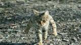 【崩坏3】我的宠物
