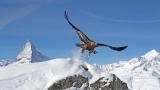 纪录片.PBS.阿尔卑斯.E02.2021[高清][英字]